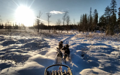 Dog sledding in deep snow