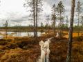 Walking through autumn wetlands