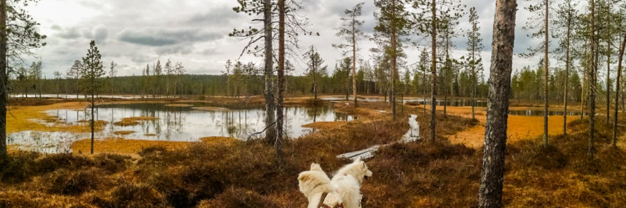 Special Offer! Autumn week with sled dog training and nature activities €450/€650/pp