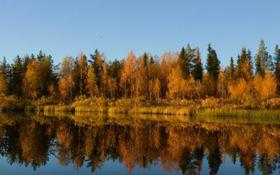 Flaming autumn foliage