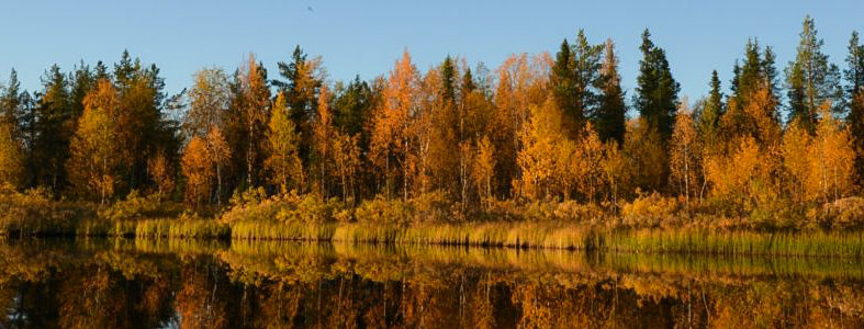 Ruska – The time of autumn splendour when leaves turn into vivid shades of red, yellow and orange
