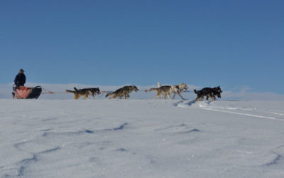 Huskies racing in snow