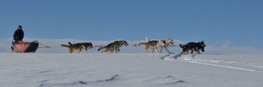 6 historical facts you probably didn't know about sled dogs